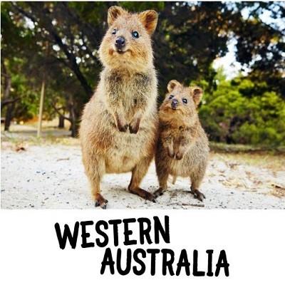 Auf Tuchfühlung mit Quokkas und Walhaien in Westaustralien