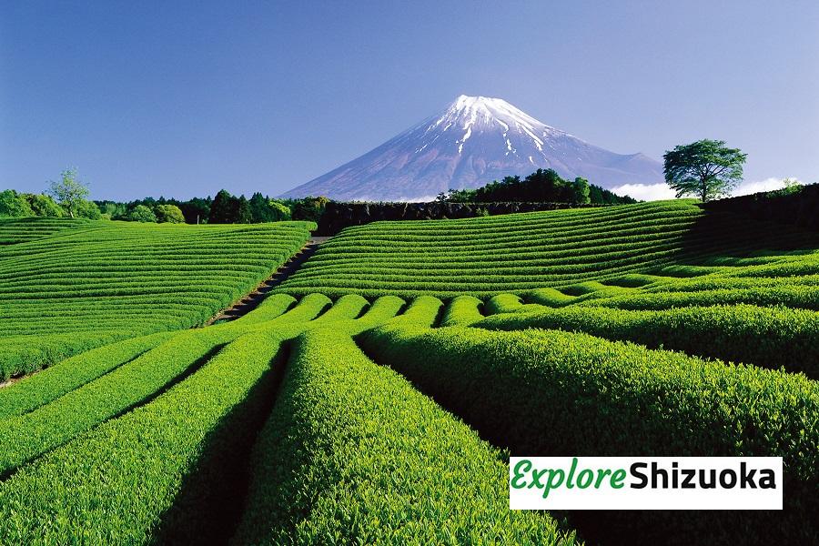 Shizuoka – Japan abseits der ausgetretenen Pfade